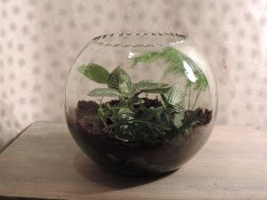 accessoires-de-maison-terrarium-en-boule-avec-ses-plantes-14132799-dscn4934-1aa76-b8538_big